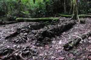 Kokoda Anzac 2011 2 247