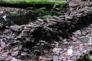 Mortar Posn